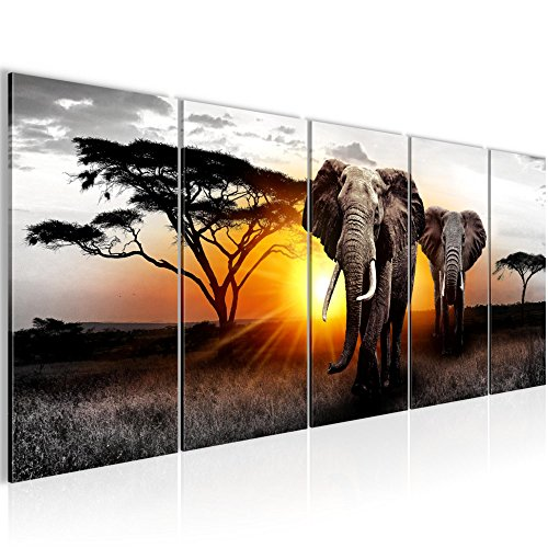 Afrika & Tiere